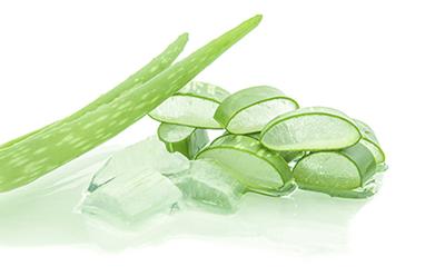 提到美容你会想到什么植物芦荟四大美容功效广州美丽加美容仪器