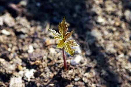 小树苗成长