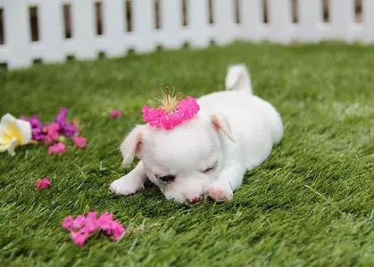 小狗为什么喜欢乱咬东西呢?