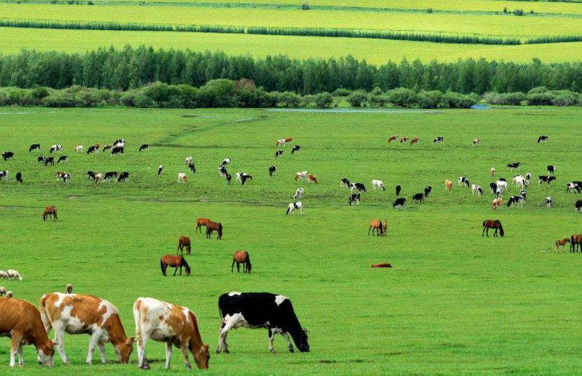 养牛人必看,需要准备哪些常用药物?