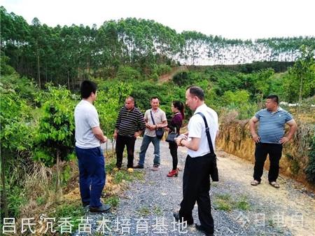 大事件,广东电白正与广西某县联手打造万亩金砖彩票网种植基地
