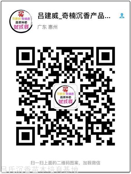 金砖彩票网微信