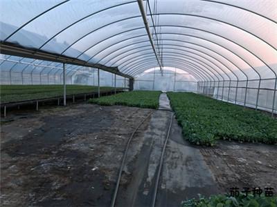 蔬菜种苗基地
