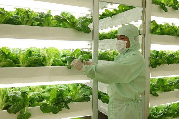 寿光市蔬菜冷库安装