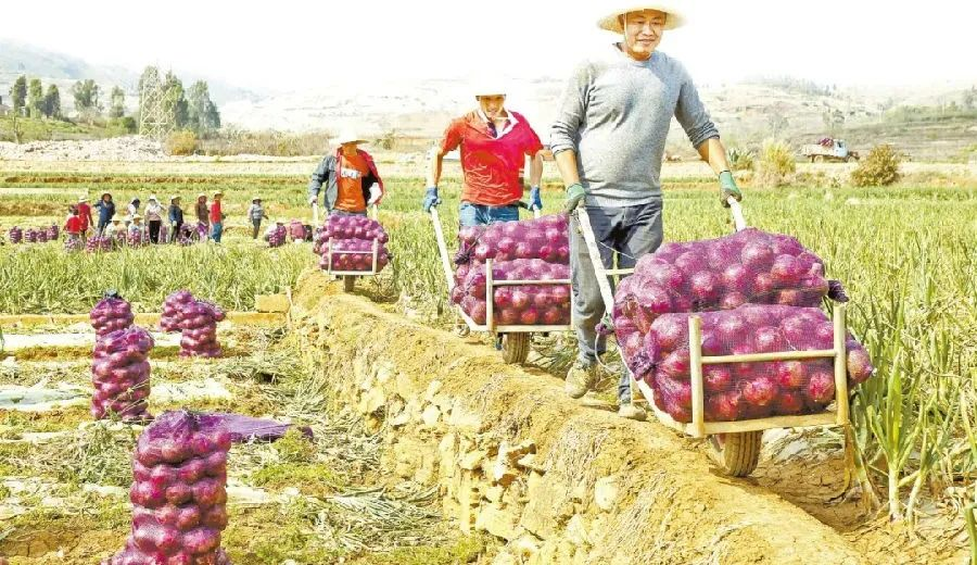 全国人大代表谢德体:实现农业机械化,才能将农资效益最大化